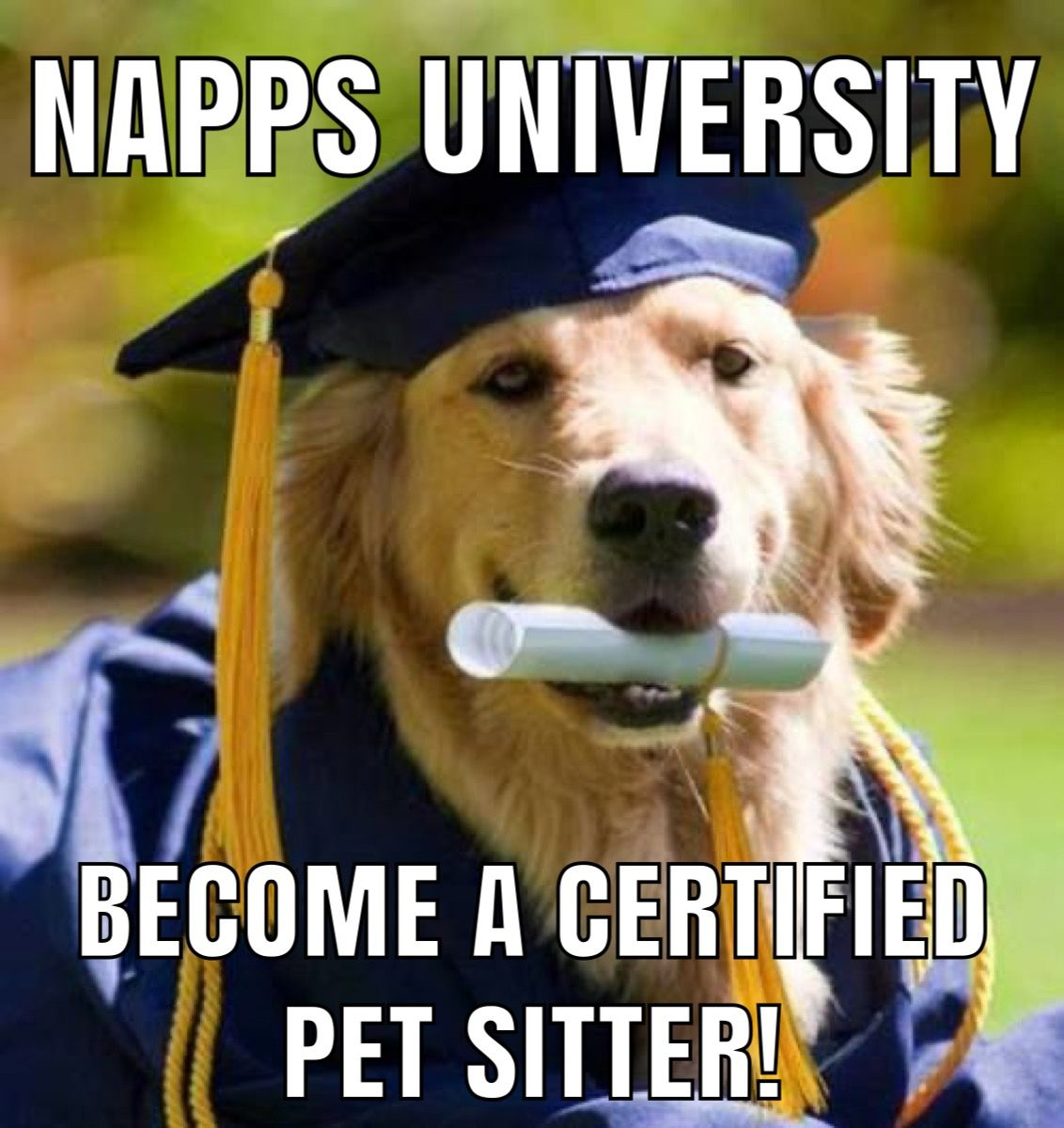 The NAPPS Certification Course is a broadrange and in
