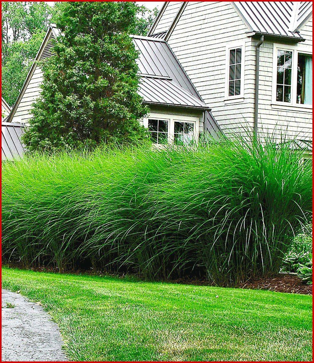 Pflanzen Als Sichtschutz Garten Sie Werden Unsere Referenz Lieben