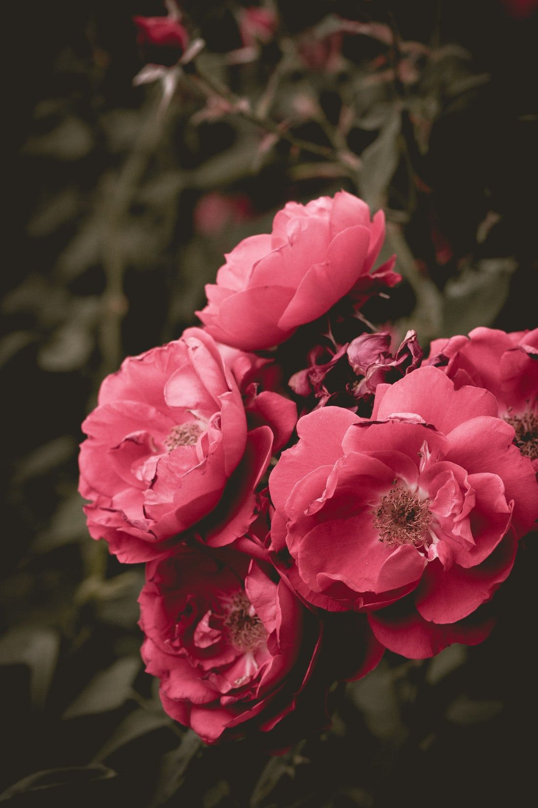 Focus Photography Of Pink Petaled Flowers Hd Flower Wallpaper Orange Flower Photos Flowers Photography Coolest flower wallpapers hd