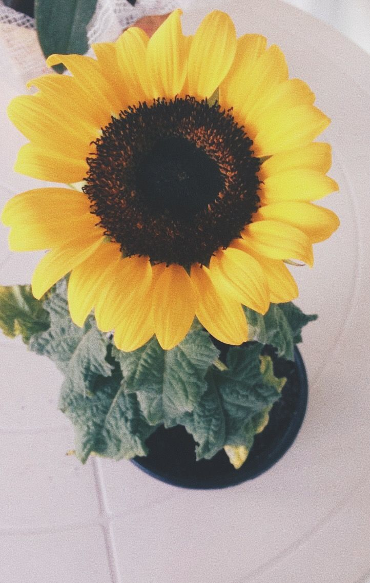 Irismmavila Very Pretty Flowers Too Pinterest
