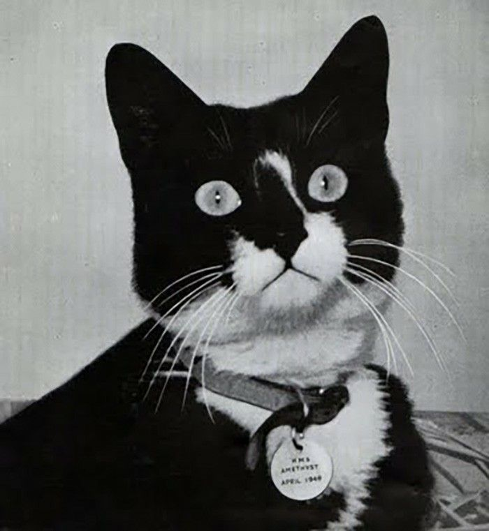 Unsinkable Sam Was A Tomcat Owned By The German Navy He Was Aboard 3 Seperate Ships During World War 2 And Survived The Sinking Unsinkable Sam Cats Ships Cat