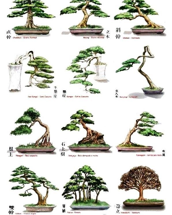 Types of bonsai #bonsaiplants