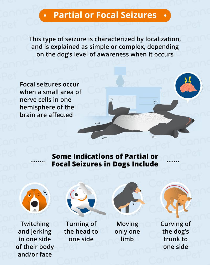 Types Of Seizures In Dogs Canna Pet Epilepsy In Dogs Dog