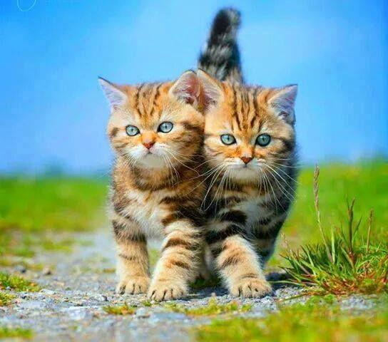 I Love Dem Kitties 3 Image By Michelle Hannan Cute Cats