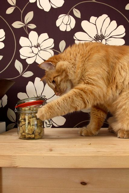 chewy cat treats FOR CATS! Really great recipe - mine loves them. I used chicken cat food, not purée but shredded from a can & I added 1/2 tbsp catnip. Easy!