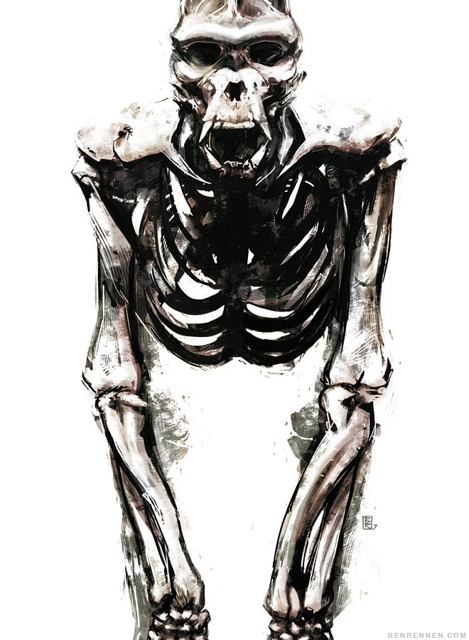 Unique Anatomy Of Gorilla Gallery - Anatomy Ideas - yunoki.info