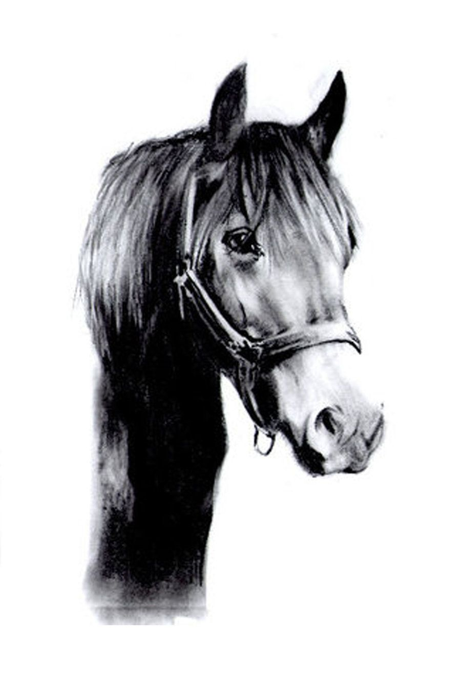 Horse Drawings | black horse drawing by slippy88 ...