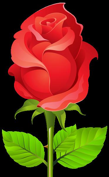 Deco Rose Png Clip Art Png Image Rose Flower Wallpaper Beautiful Flower Drawings Beautiful Flowers Wallpapers