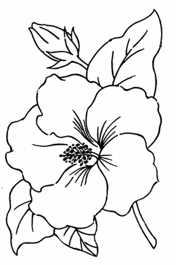 Design Simple Flower Drawing Flower Drawing Hibiscus Flower Drawing