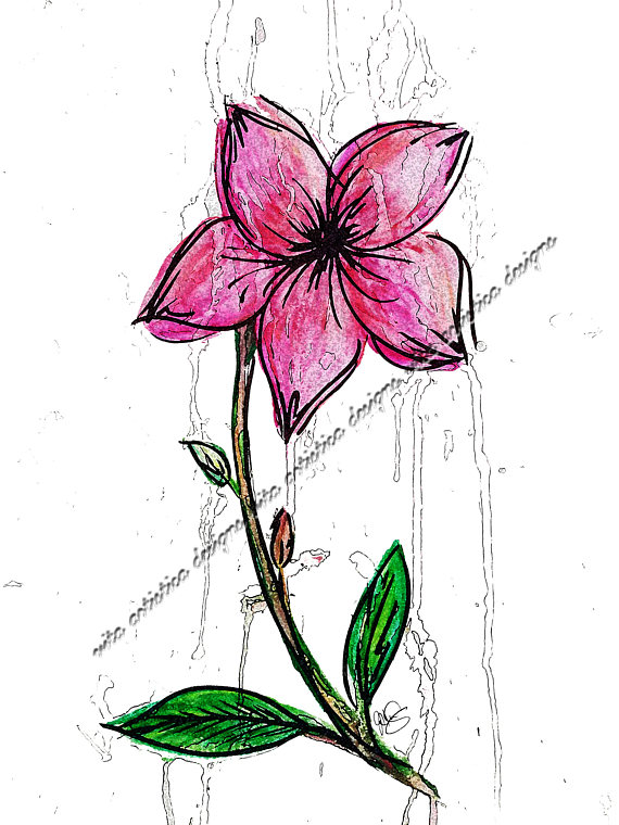 Single Flower Watercolor