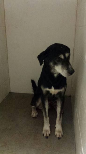 Found Quincy Il Currently At Adams County Animal Shelter Found