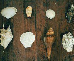 shells <3