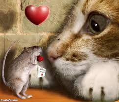 Afbeeldingsresultaat voor cat and mouse