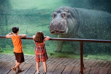 10 Amazing Zoo Aquarium Animal And Human Interactions Animal