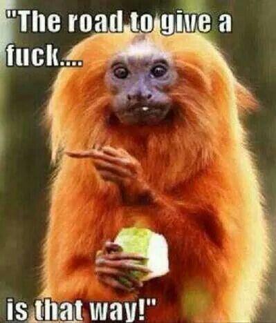 Omg love this monkey♡♥♡♥