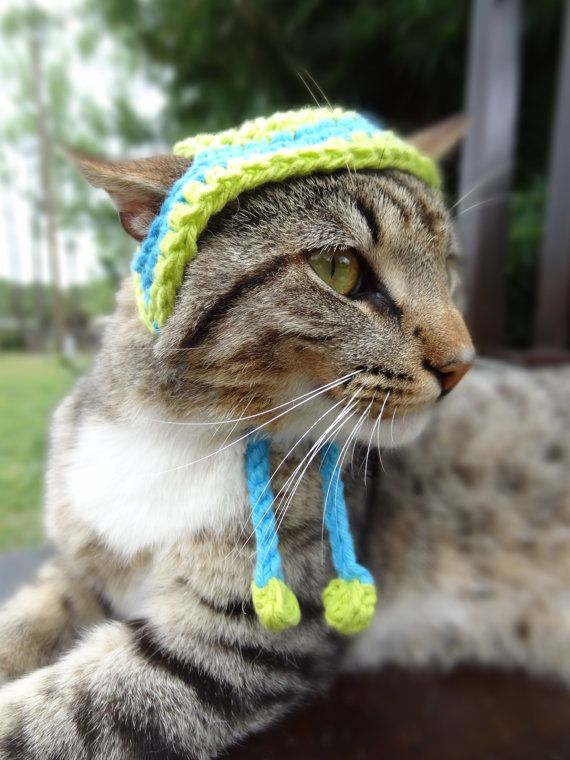 Cat Hat Pet Hat Cats Pets Small Dogs The by iheartneedlework