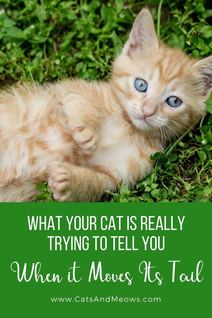 What Your Cat Is REALLY Trying To Tell You When It Moves