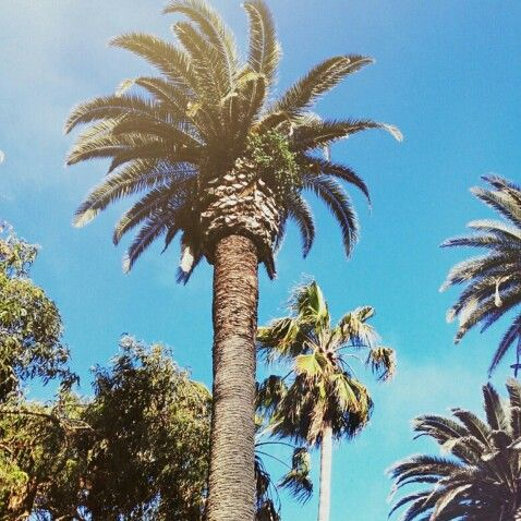 Palm trees are everywhere