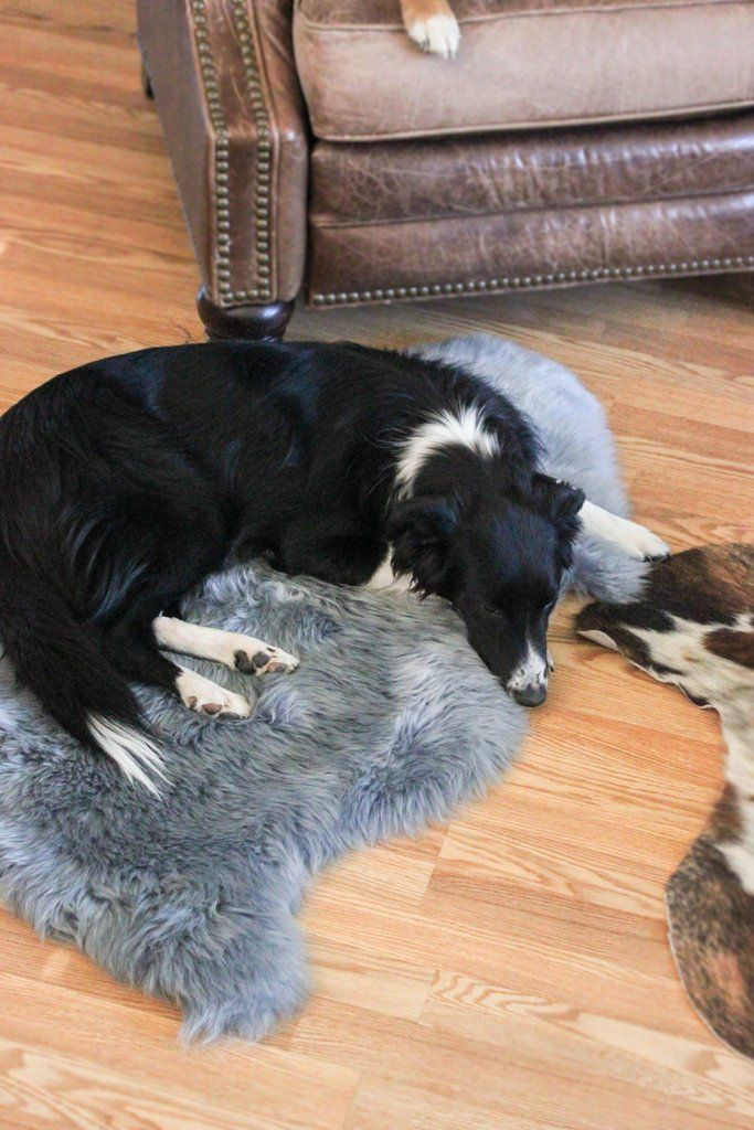 Sheepskin Dog Bed Rug Gunmetal Grey