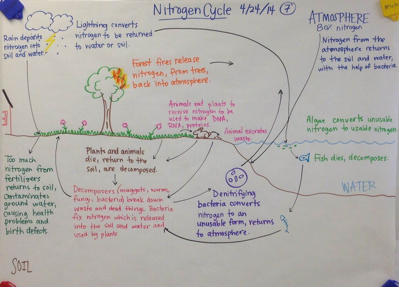 Nitrogen cycle biology glad anchor chart biology pinterest nitrogen cycle biology glad anchor chart ccuart Gallery