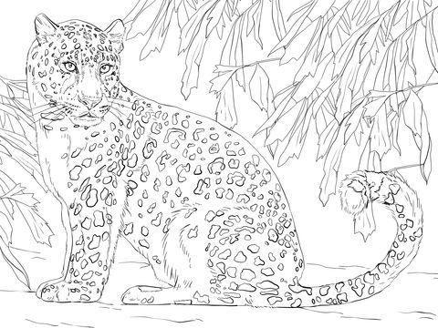 Amur Leopard Coloring Page Leopard Art Animal Coloring Pages