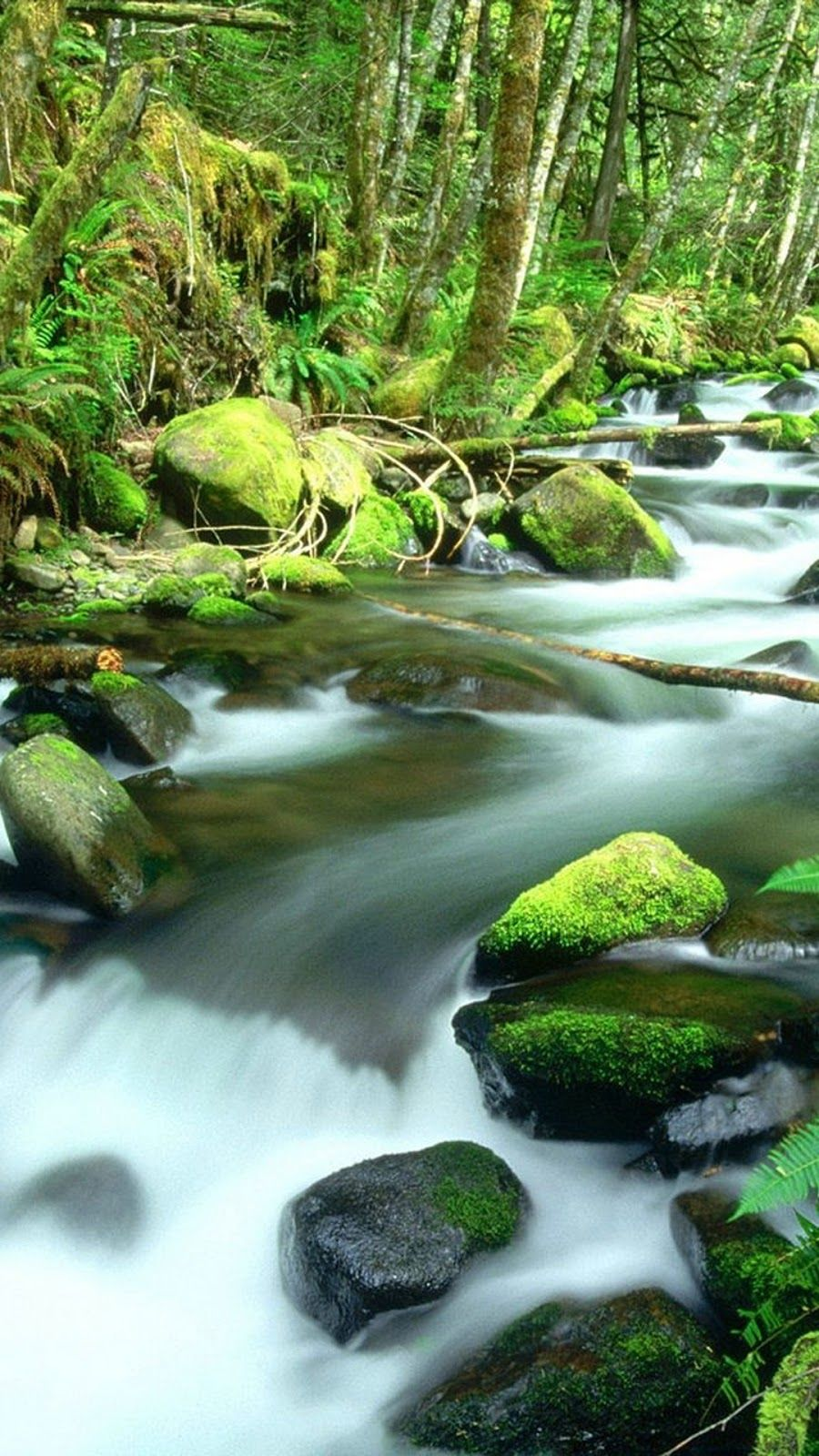 Portrait Nature Wallpaper Daintree Rainforest Rainforest Nature
