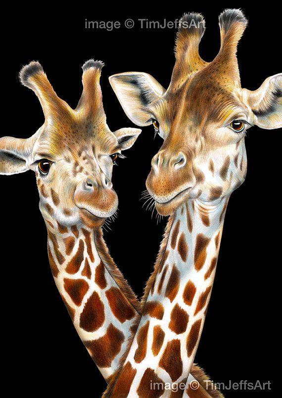 Dibujo De Lapiz De Color De Jirafas Por Timjeffsart En Etsy Realistic Drawings Giraffe Colors Color Pencil Drawing