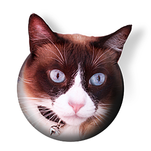 procatinator cool various cat videos with neat music one