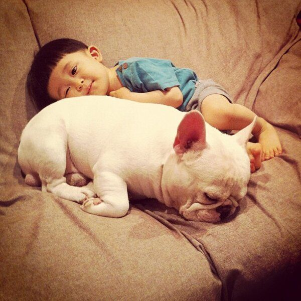 Boy And French Bulldog Are Best Friends Picture Gallery French