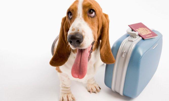 ¿Puedo viajar con mi #perro en avión?