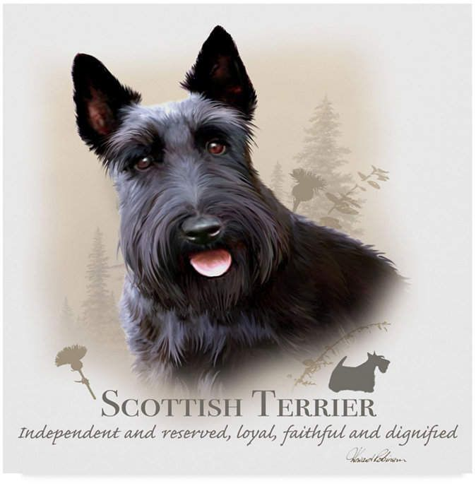 Howard Robinson Cottish Terrier Canvas Art 35 X 35 Scottish