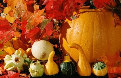 carnival or fall festival games ideas festivals halloween and