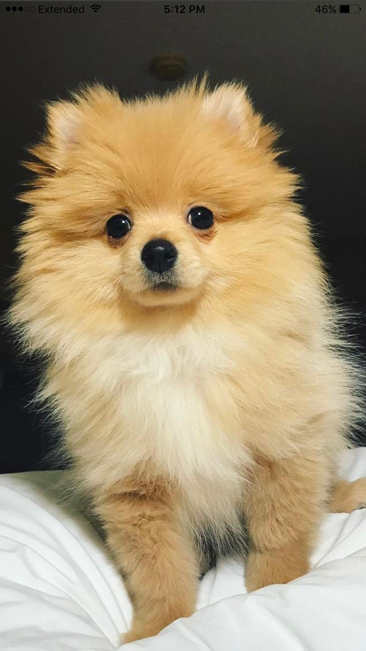 Pin Von Valentina Killinger Auf Dogs Susse Tiere Tiere Niedliche Hunde