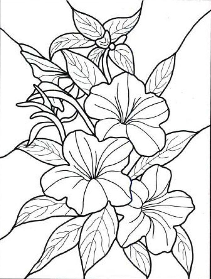 coloring pages of flowers con imágenes  dibujos