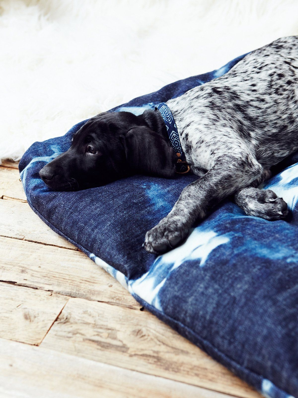 Tell Me Your Dreams Dog Bed Dog bed, Dogs, Designer dog beds