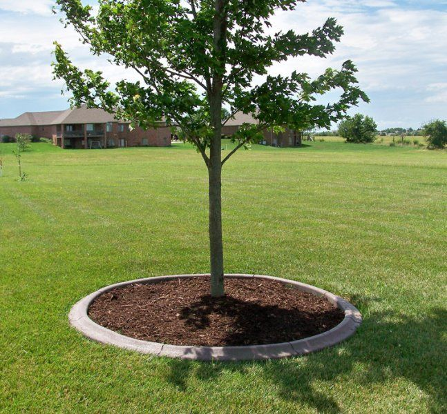 Small Trees For Borders: Awesome Ideas For Landscaping Around Trees