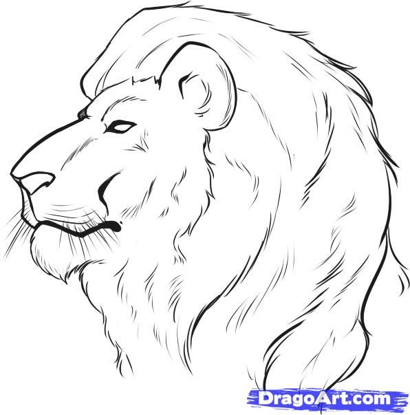 Drawing faces how to draw a lion face step by step safari animals animals free