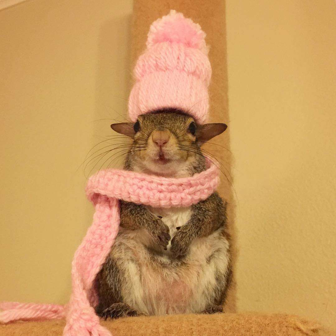 31 Adorable Animals inSweaters recommendations