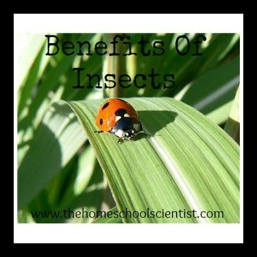 Benefits Of Insects And Free Insect Worksheet Homeschool Biology
