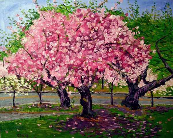 A Searching Spirit May 2010 Cherry Blossom Tree Blossom Trees Cherry Blossom Painting