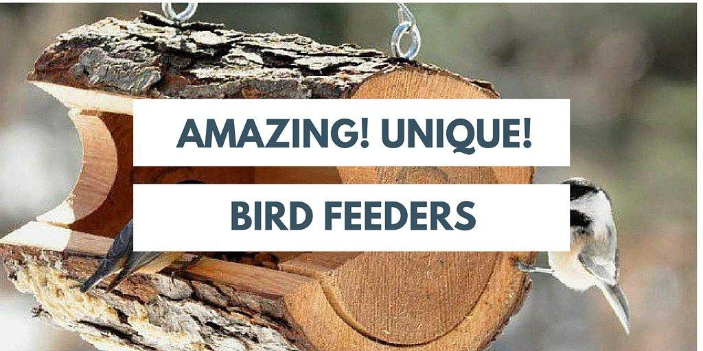 Top 10 Unusual Bird Feeders