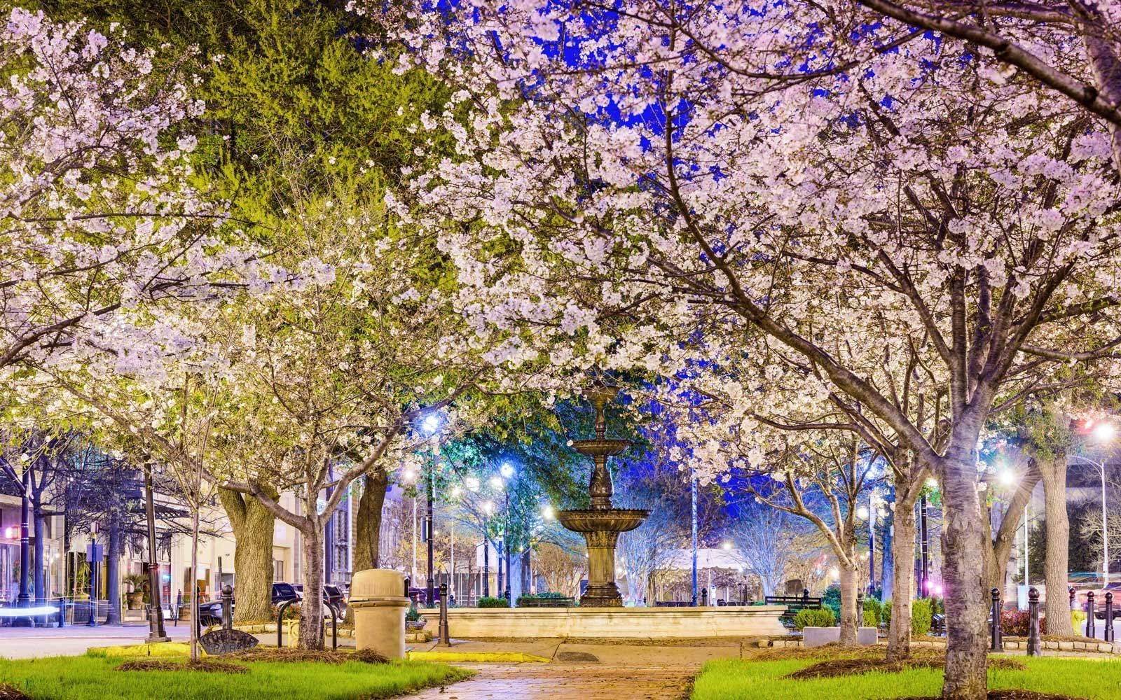 6 Places Besides D C Where You Can See Cherry Blossoms This Year Spring Travel Destinations Macon Cherry Blossom Festival