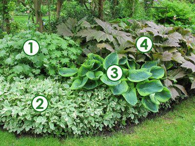 Une sc ne de feuillages d coratifs l 39 ombre sc nes de Massif decoratif jardin