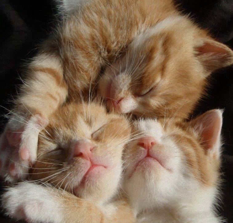 SO CUTE TRIPLET | Kittys | Pinterest | Fotos fantasticas, Gato y ...