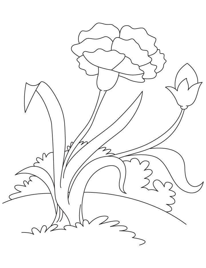 Pink carnation coloring page | Things to color | Pinterest | Pink ...