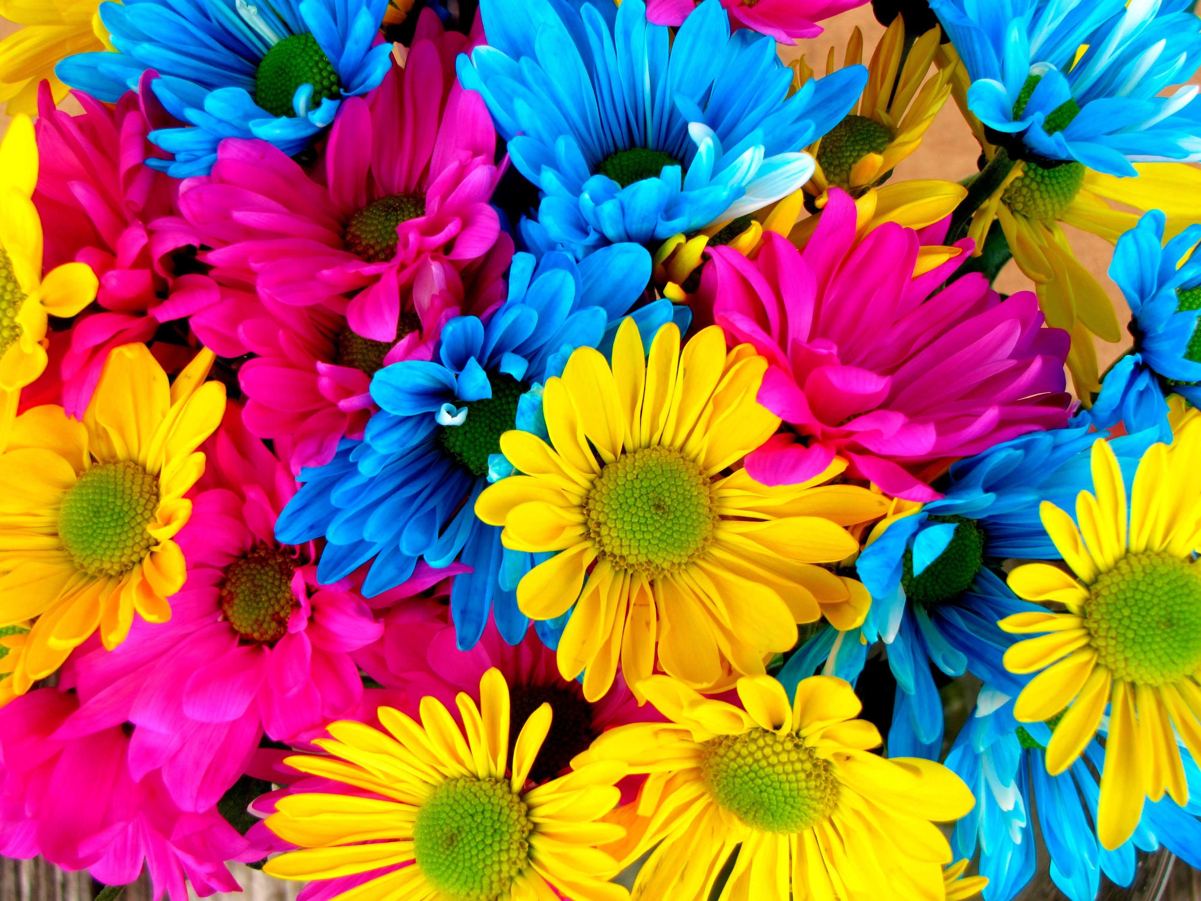 Imagenes De Fondo Flores Para Pantalla Hd 2: Imágenes De Flores De Colores