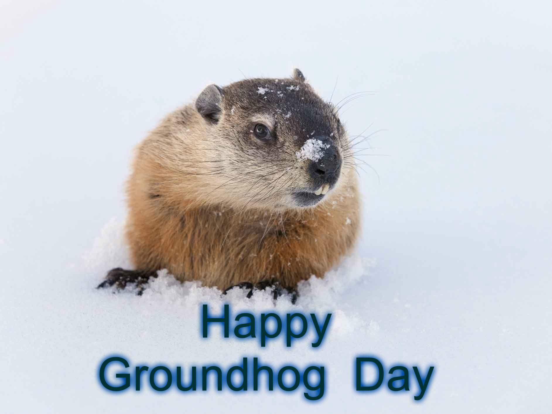 Groundhog Day Treats Groundhogday Groundhog Day Happy Groundhog Day Inspirational Quotes God