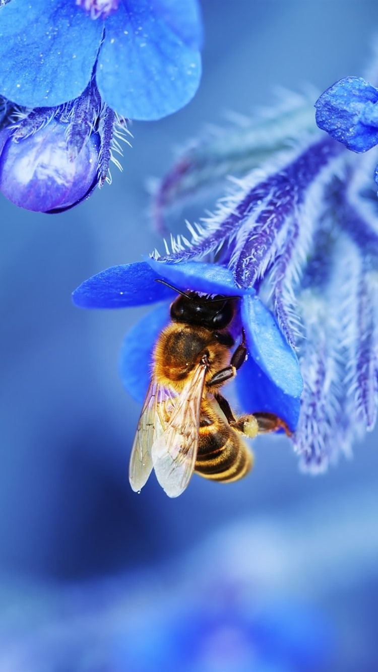 Pin By Kathy On Bees In 2020 Blue Flower Wallpaper Bee Bee Images