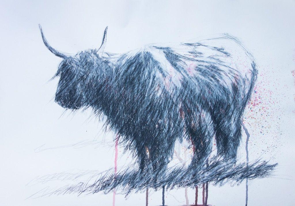 Artist Sean Briggs producing a sketch a day Highland cow #art #drawing #highlandcow #http://etsy.me/1rARc0J #sketch
