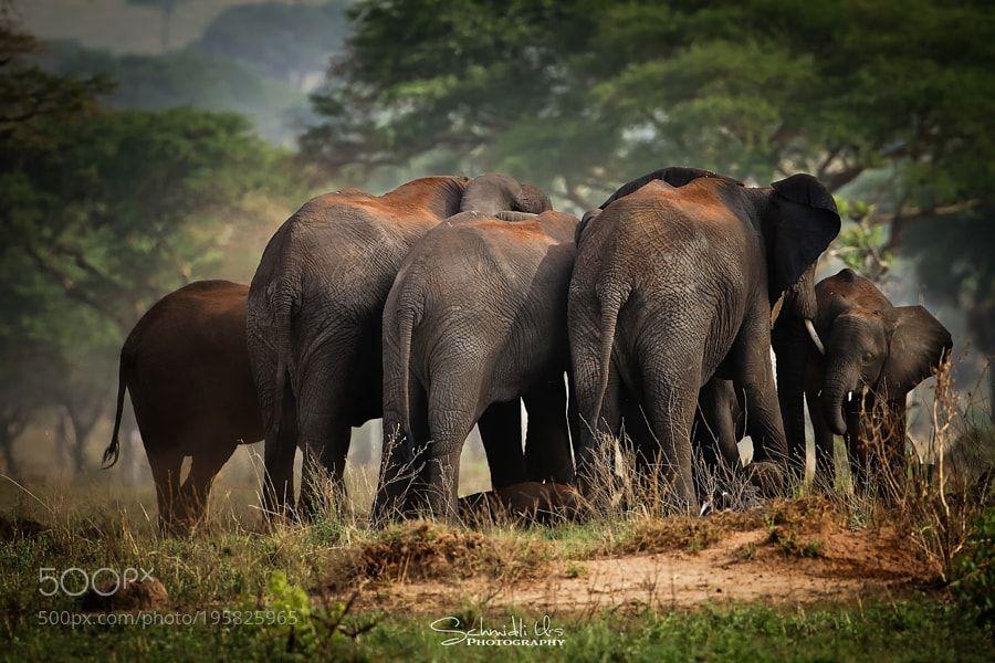 Elefantenbande by urs-schmidli